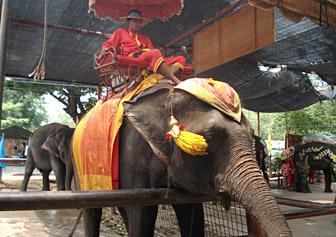 elepha_ride2.jpg